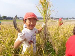 美心幼愛園 | 熊本市西区中島町の認可保育所,稲穂狩り
